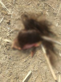 मेले में झूला झूल रही बालिका हुई हादसे का शिकार, सर की चमड़ी सहित उखड़े बाल