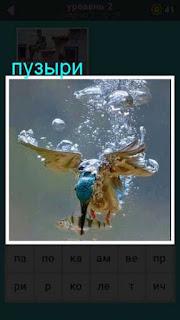 птица под водой поймала рыбу и пускает пузыри 667 слов 2 уровень