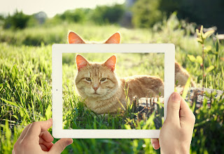 10 consejos para tomar mejores fotos de gatos