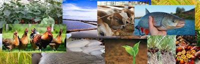 Manfaat Zeolite pada Tanah, Tanaman, Ternak dan Tambak