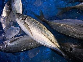 manfaat-ikan-mackerel-bagi-kesehatan,www.healthnote25.com