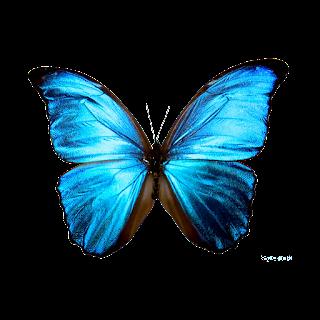 https://pixabay.com/users/keifit-2065861/