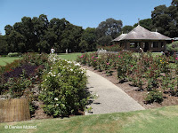 Rose borders - Royal Botanic Gardens, Sydney, Australia