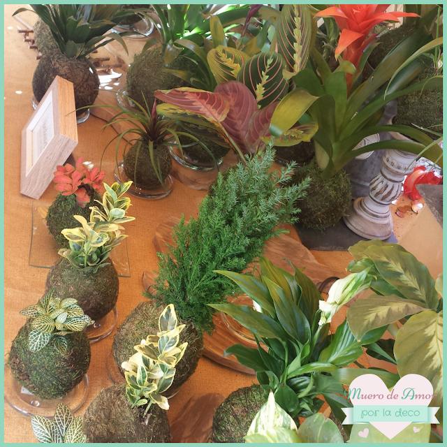 Plantas naturales sin maceta de VERDEARTE-By Ana Oval-9