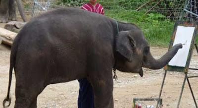Sự thật sau những tiết mục voi vẽ tranh nổi tiếng Thái Lan