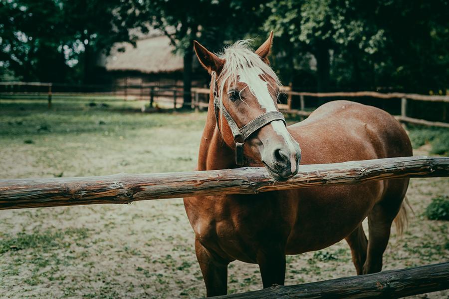 plener ślubny, Lublin, fotografia ślubna, wedding, zdjęcia ślubne, zakochani, skansen, koń