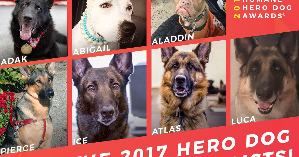 Seven courageous canines named finalists for 2017 American Humane Hero Dog Awards