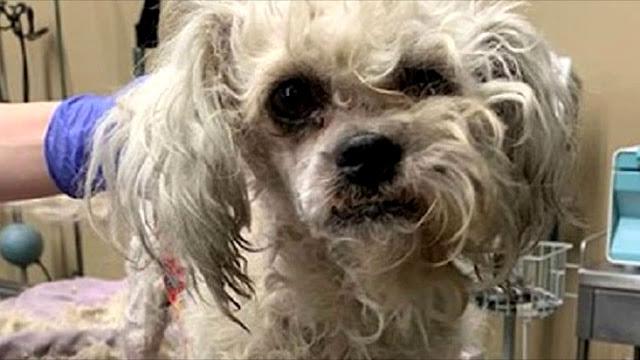 Целый год маленький пес подходил к людям в парке, надеясь, что ему помогут, но все равнодушно шли мимо