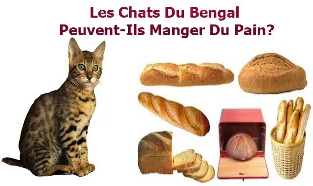 Les Chats Du Bengal Peuvent-Ils Manger Du Pain?