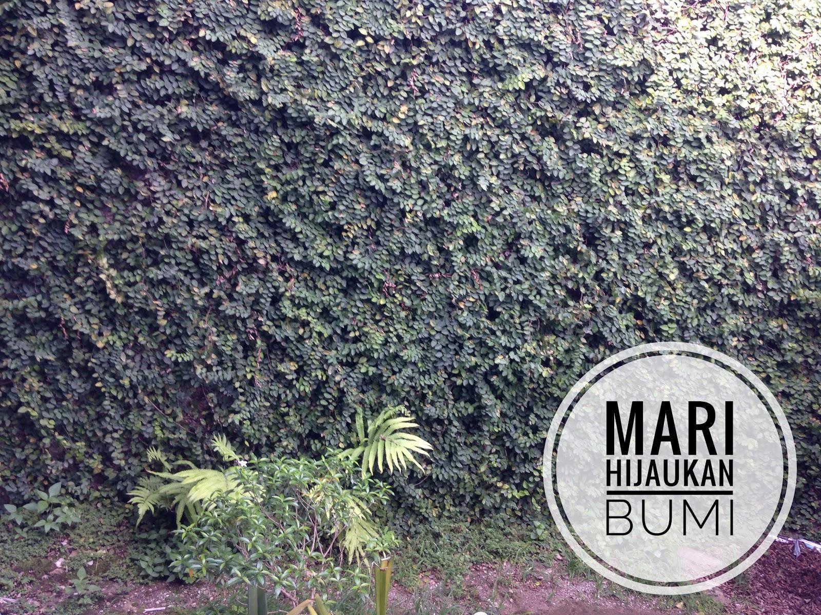Hijaunya Dinding Rumah Berkat Tanaman Dollar Rambat Elisakaramoy S