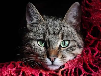 cat normal resolution hd wallpapers 22