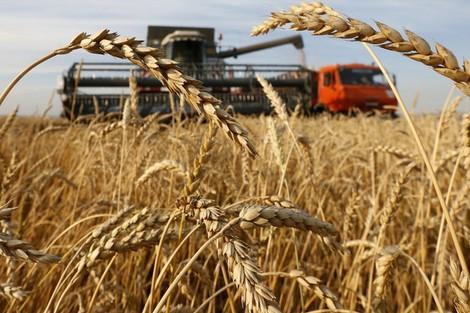 حكومة العثماني تقرر إلغاء الرسوم الجمركية على القمح الروسي