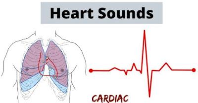 The Magic of Heart Sounds, heart sounds, human heart, circulation, heartbeat,