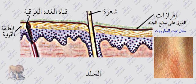 آلية عمل الجهاز المناعى فى  الإنسان - المناعة الطبيعية -خط الدفاع الأول - الجلد