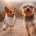 Dogs are better at detecting cancer 'than advanced technology?