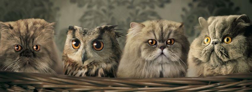 ¿Cuál de los gatos es diferente?