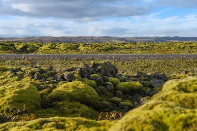 Eldhraun Lava Field in Iceland with volcanic moss off the Ring Road