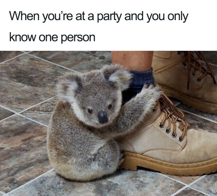 90 Introvert Memes That Will Speak Your Mind For You 2020
