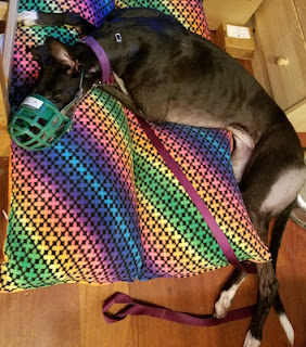 Black dog lying on a rainbow colored dog bed with butt hanging off the edge