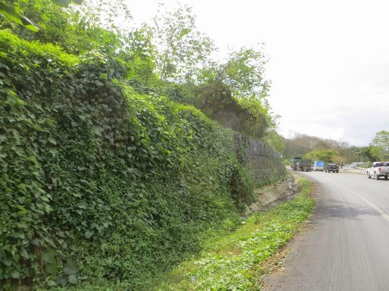 Зелень у дороги