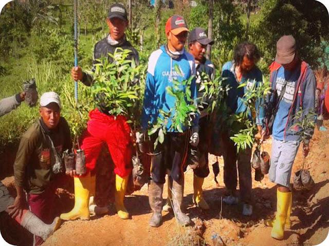 Kodim 1506 Pelopori Program Reboisasi 1500 Pohon di Gunung Botak