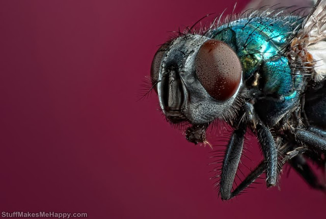 Fly Spider Images