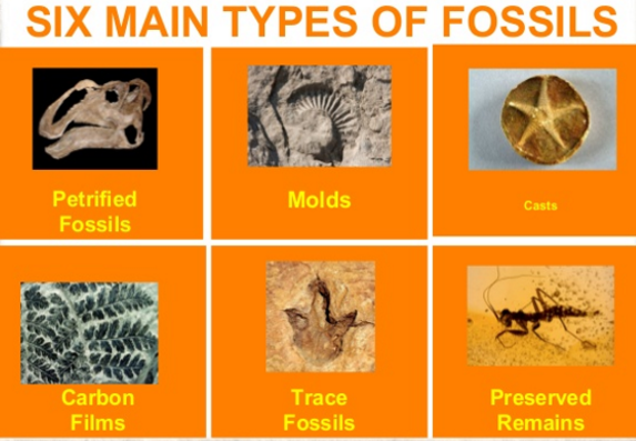Different methods of dating fossils