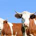Conheça a Vedera Nutrição Animal