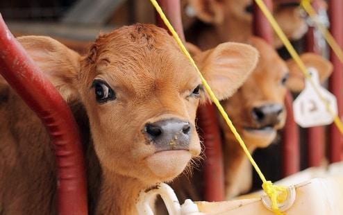 8 animais mal-humorado que odeiam você