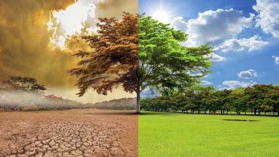 No hay emergencia climática