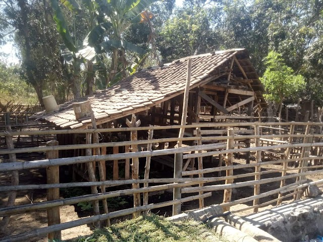 Delapan Ekor Kambing Milik Warga Nggaro Bae Rabadompu Barat, Raib Dicuri Orang