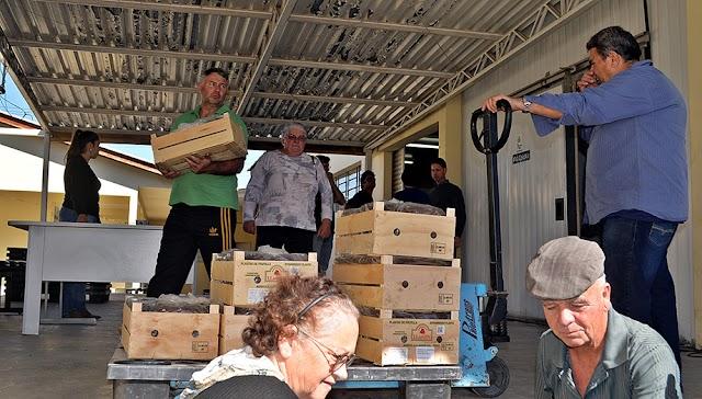 Prefeitura entrega mais de 80 mil mudas de morango