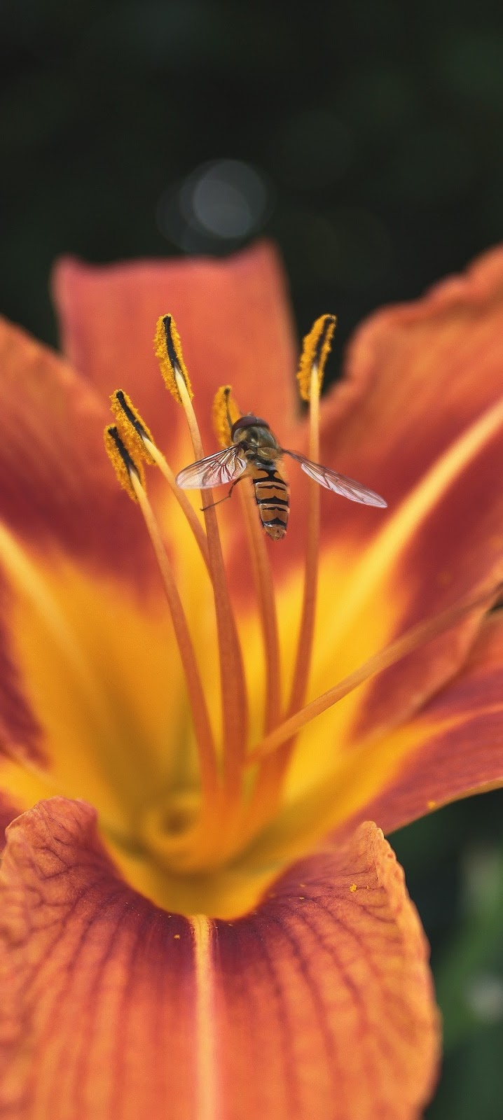 An insect collecting nectar from a flower.