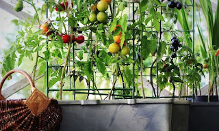 The Benefits of Growing Your Own Garden