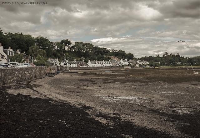 The mysterious shore of Plockton, Mandragoreae