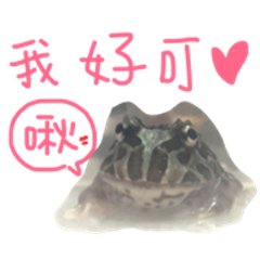 My lovely Horned Frogs 94 love murmur