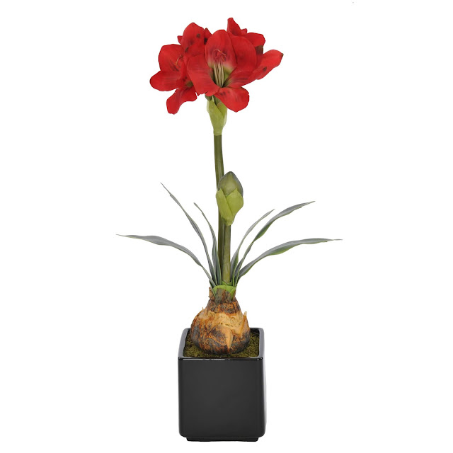 Amaryllis Flowers Beautiful Photos, HD Images And Wallpapers ❤