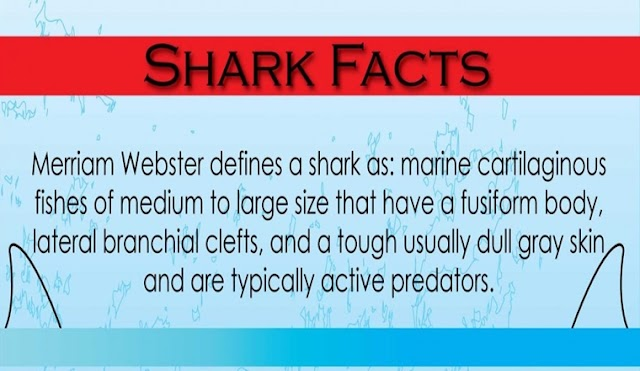 Getting to know sharks #Infographic