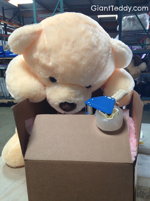 Tape can be a work hazard when you are a giant fluffy teddy bear...Cozy Cuddles in our Shipping Dept