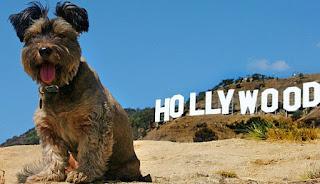 perros caracas casting para novela venevision