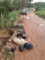 Polícia encontra novo local de desova de cães em Cuiabá
