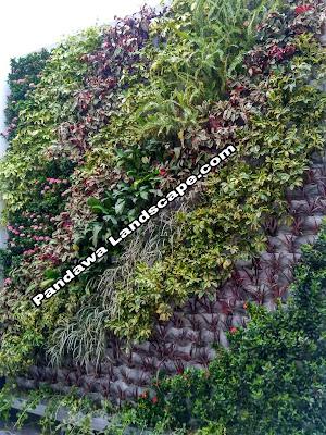 Tukang taman vertikal garden surabaya