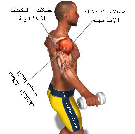 تشريح عضلة الكتف