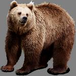 bear in spanish