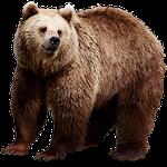 bear in spanish, animals in Spanish, animal names in Spanish, bear in Spain