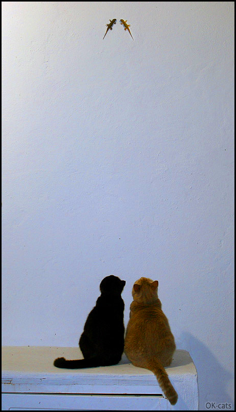 Photoshopped Cat picture • 2 cats chasing lizards same color, black and ginger, in a funny way :)