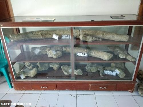 Fosil Gajah Purba Banjarejo
