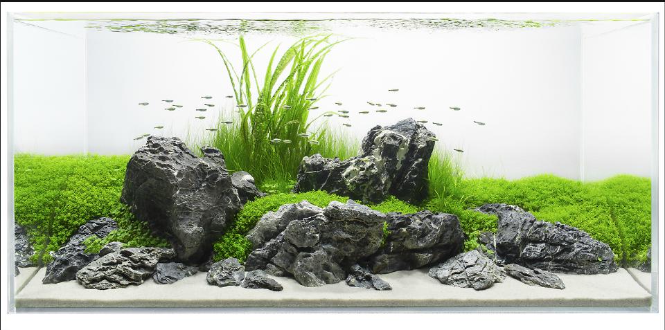 Bố cục đá cho hồ thủy sinh