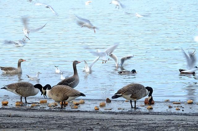 Brotreste vom Füttern der Enten