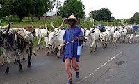 Federal government to pay N100b to Fulani herdsmen